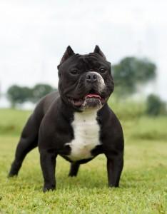 Le danger de popularité des Dogs of the Dow